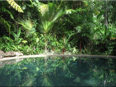 Daintree Rainforest Retreat - Tour Australia In Style - Australia Travel