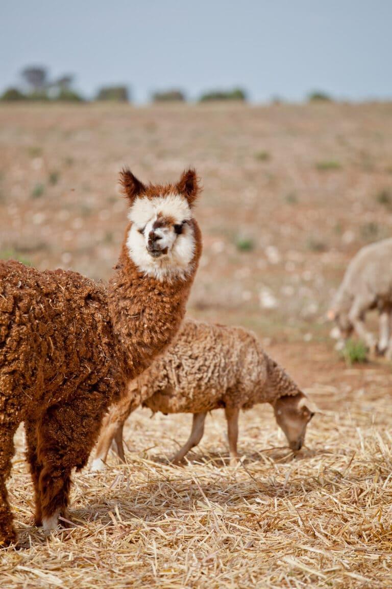 Lyrabendi Farmstay - Tour Australia In Style - Australia Travel