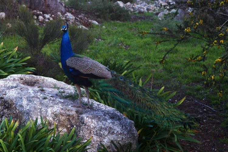 Broken Gum Country Eco Retreat - Tour Australia In Style - Australia Travel