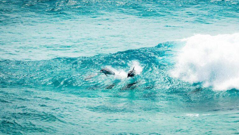 Stradbroke Island - Tour Australia In Style - Australia Travel