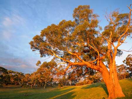 The Barn at The Old Oak B&B - Tour Australia In Style - Australia Travel