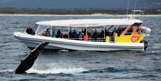 Whale One - Sunshine coast - Tour Australia In Style - Australia Travel
