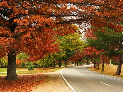 Carawatha Gardens - Bright - Tour Australia In Style - Australia Travel
