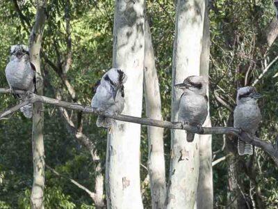 Banjos Bushland Retreat - Tour Australia In Style - Australia Travel