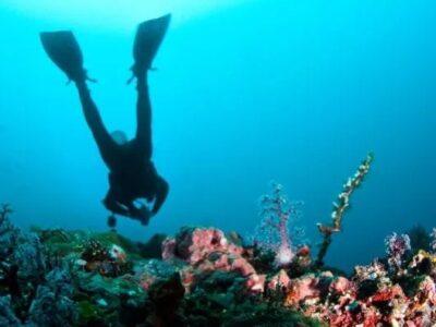 Dive In Australia - Tour Australia In Style - Australia Travel