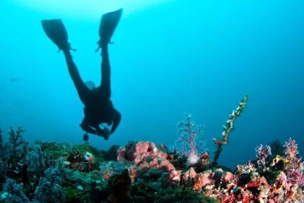 Dive In Australia - Tour Australia In Style - Australia Travel