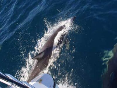 Jervis Bay Wild - Tour Australia In Style - Australia Travel