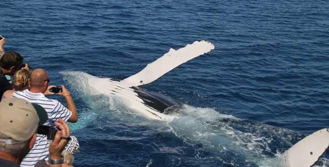 Freedom Whale Watch Hervey Bay - Tour Australia In Style - Australia Travel
