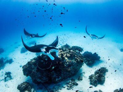Lady Elliot Island - Great Barrier Reef - Tour Australia In Style - Australia Travel