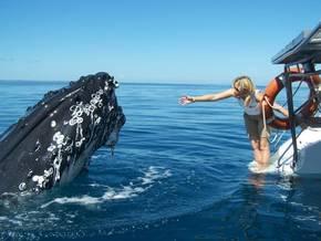 Shayla Cruises Hervey Bay - Tour Australia In Style - Australia Travel