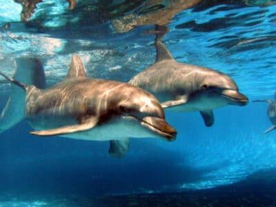 Dolphin Marine Conservation Park- Coffs Harbour - dolphin