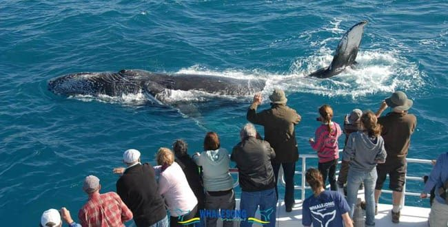 Whalesong Beach weddings - Tour Australia In Style - Australia Travel