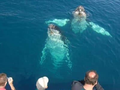 Whalesong Cruises Hervey Bay - Tour Australia In Style - Australia Travel