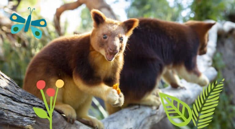 Three Great Zoos - Alive with Wonder - Tour Australia In Style - Australia Travel