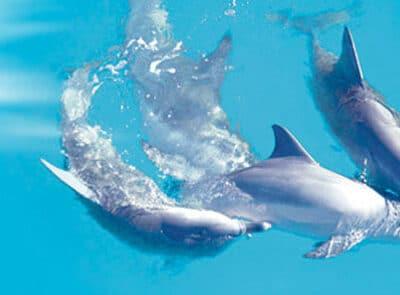 Monkey Mia Dolphin Resort - Tour Australia In Style - Australia Travel