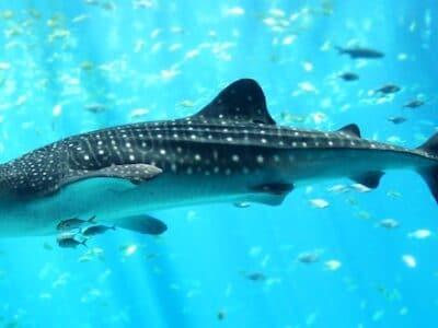 Ningaloo Reef Resort - Tour Australia In Style - Australia Travel