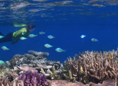 Great Barrier Reef - Tour Australia In Style - Australia Travel
